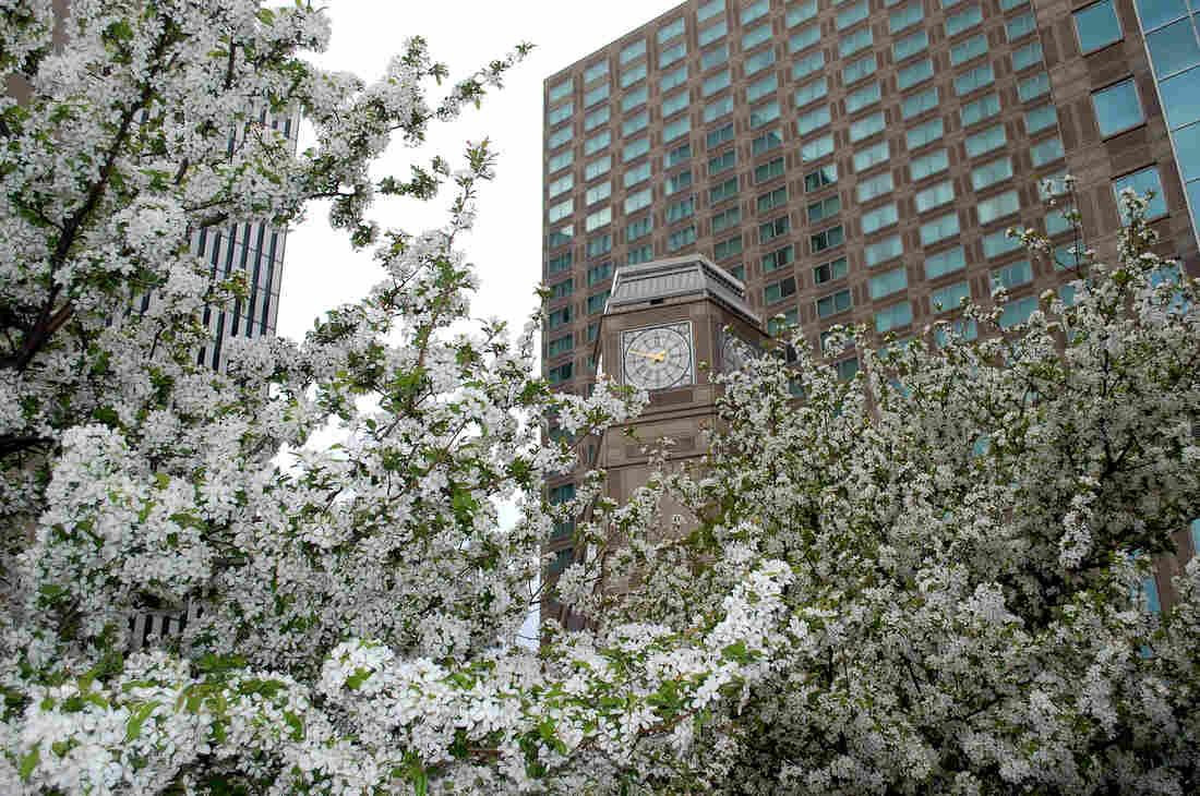 Los mejores árboles con flores en la primavera en Carolina del Norte | @BCBSNC