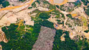 This aerial view shows the effects of gold mining on Peru's rain forest.