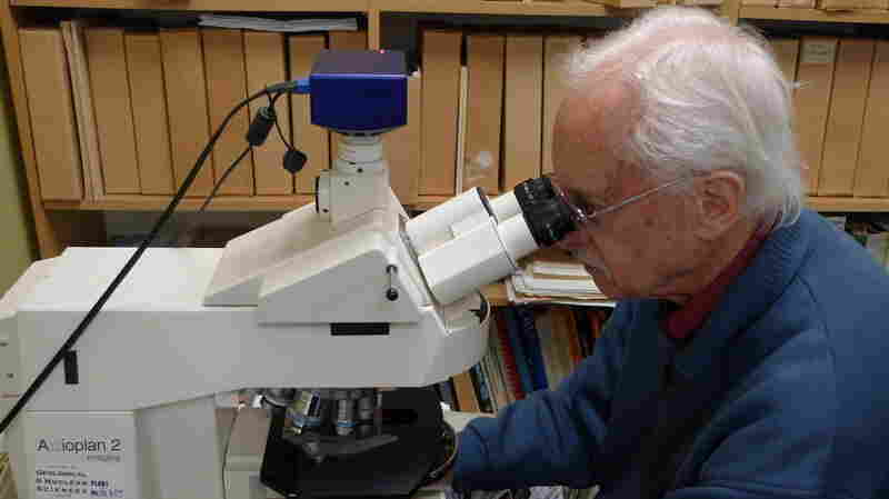 Dallas Mildenhall, New Zealand's forensic pollen expert, peers at samples through a microscope.