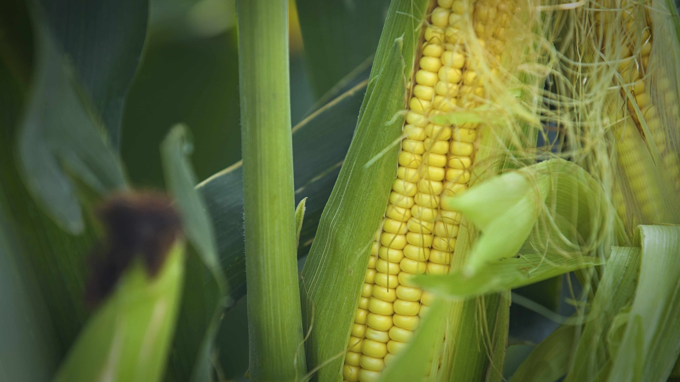 genetically altered food items record articles