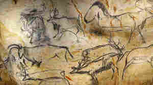 Drawings of animal figures in the life-size replica of Chauvet Cave in southern France.