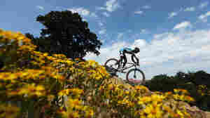 Adrien Niyonshuti of Rwanda heads down a field during the men's mountain bike race in the 2012 Olympics.