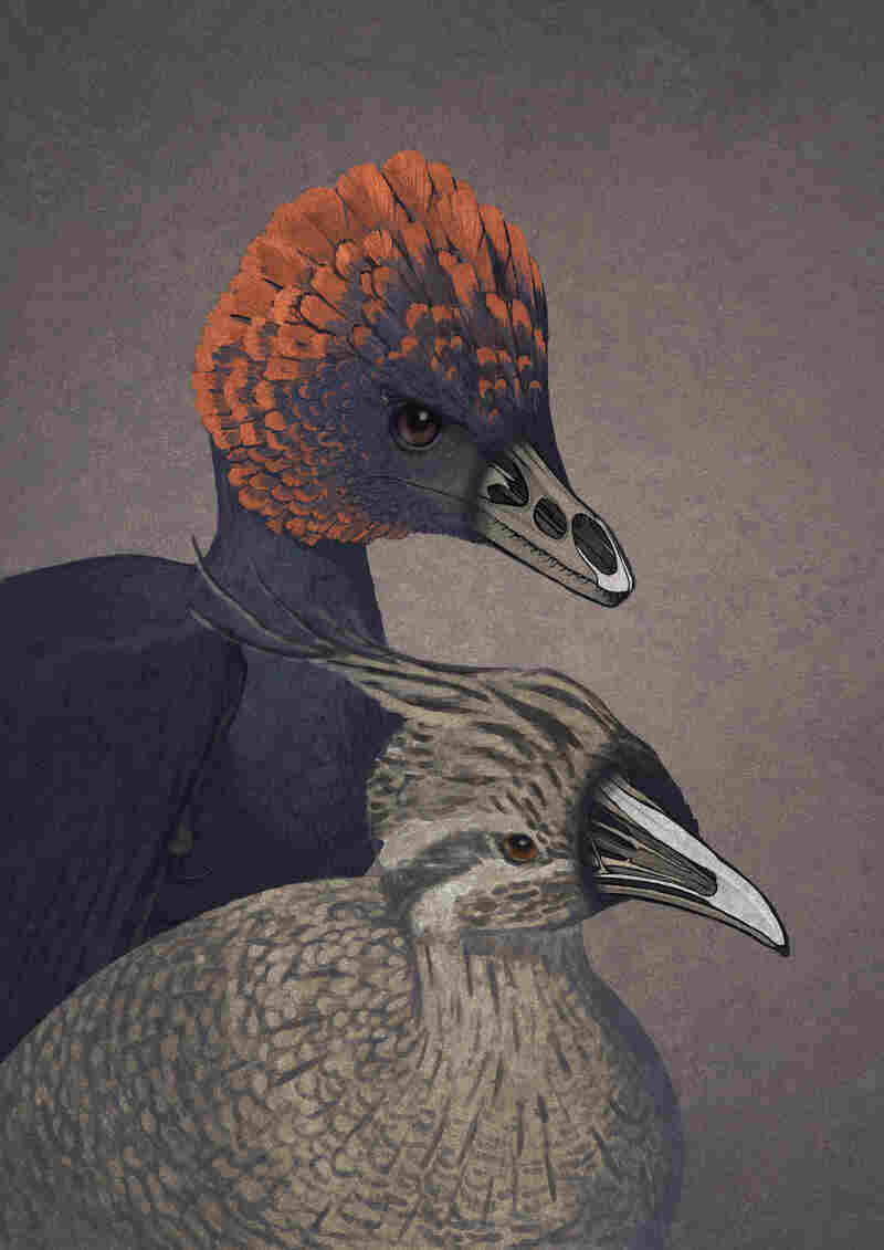 An artist's rendition of anchiornis, a non-avian dinosaur (top), and a modern tinamou, with key bones highlighted in each face.