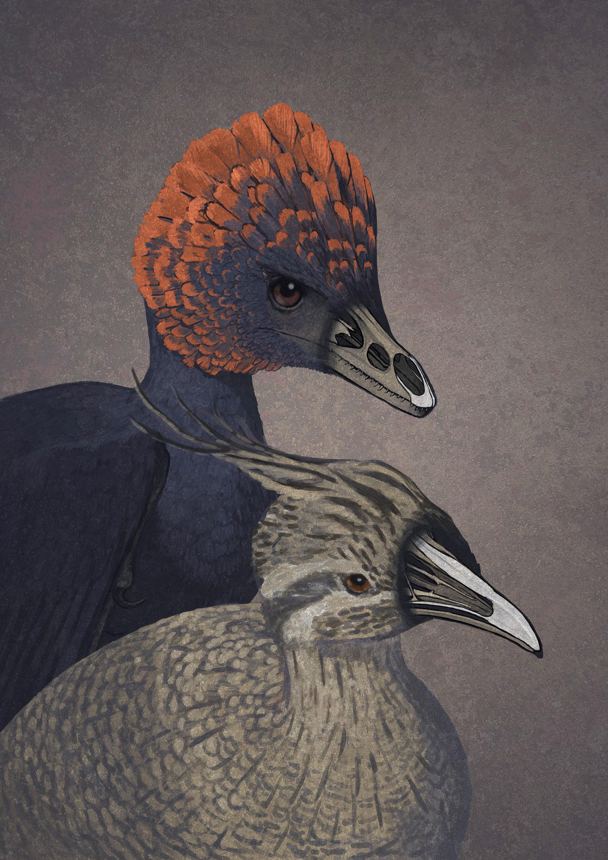 How Bird Beaks Got Their Start As Dinosaur Snouts