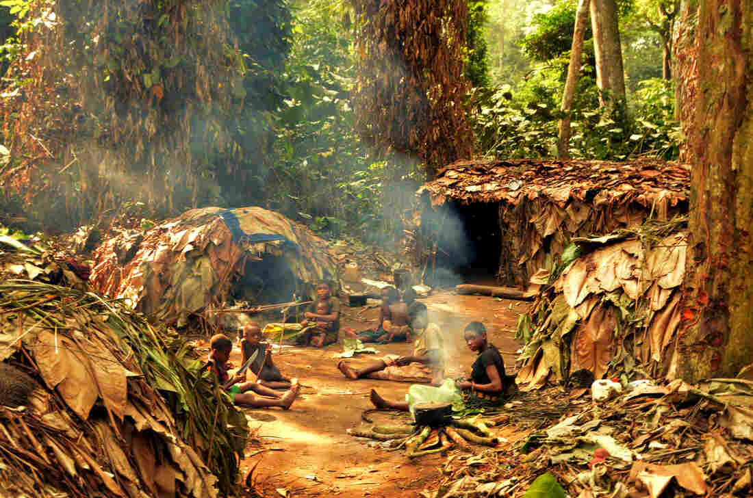 Researchers visited this Mbendjele camp in a forest in the Republic of Congo to talk to hunter-gatherers.