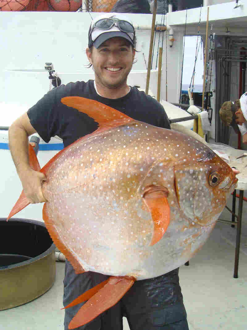 NOAA Fisheries biologist Nick Wegner holds an opah caught during a research survey off the California coast. Researchers say the opah is the first fish known to be fully warmblooded, circulating heated blood throughout its body.