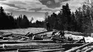 Water Logged: Firm Reclaims Timber Lost To Maine's Frigid Rivers