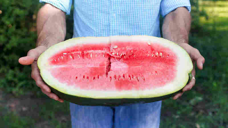 Nat Bradford holds a Bradford watermelon, known for its sweet, fragrant red flesh. The melon was created