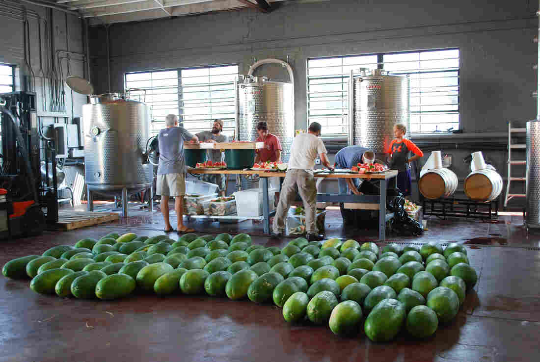 Workers at High Wire Distilling in Charleston, S.C., cut Bradford watermelons into small pieces to smash through a screen in order to extract the juice and preserve the seeds. High Wire distilled the juice into 143 bottles of heirloom brandy — 750 ml and $79 each — not made since the last century.