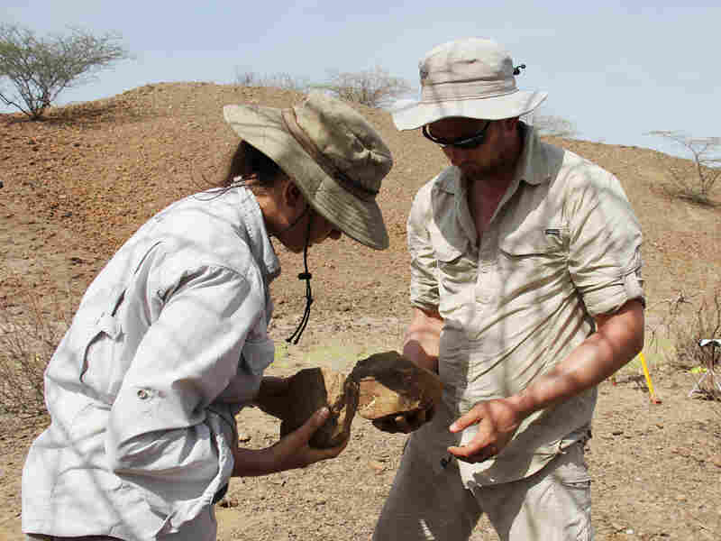 Archaeologists Sonia Harmand and Jason Lewis, of Stony Brook University, examine stone tools. Initially, she says, the scientists didn't realize the tools they found dated to hundreds of thousands of years before the first humans.