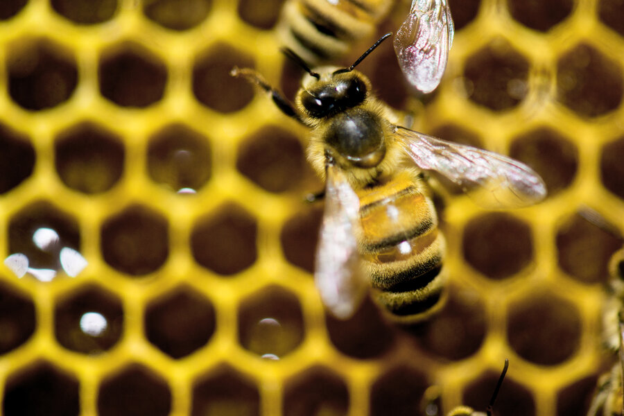 Plan Bee White House Unveils Strategy To Protect Pollinators