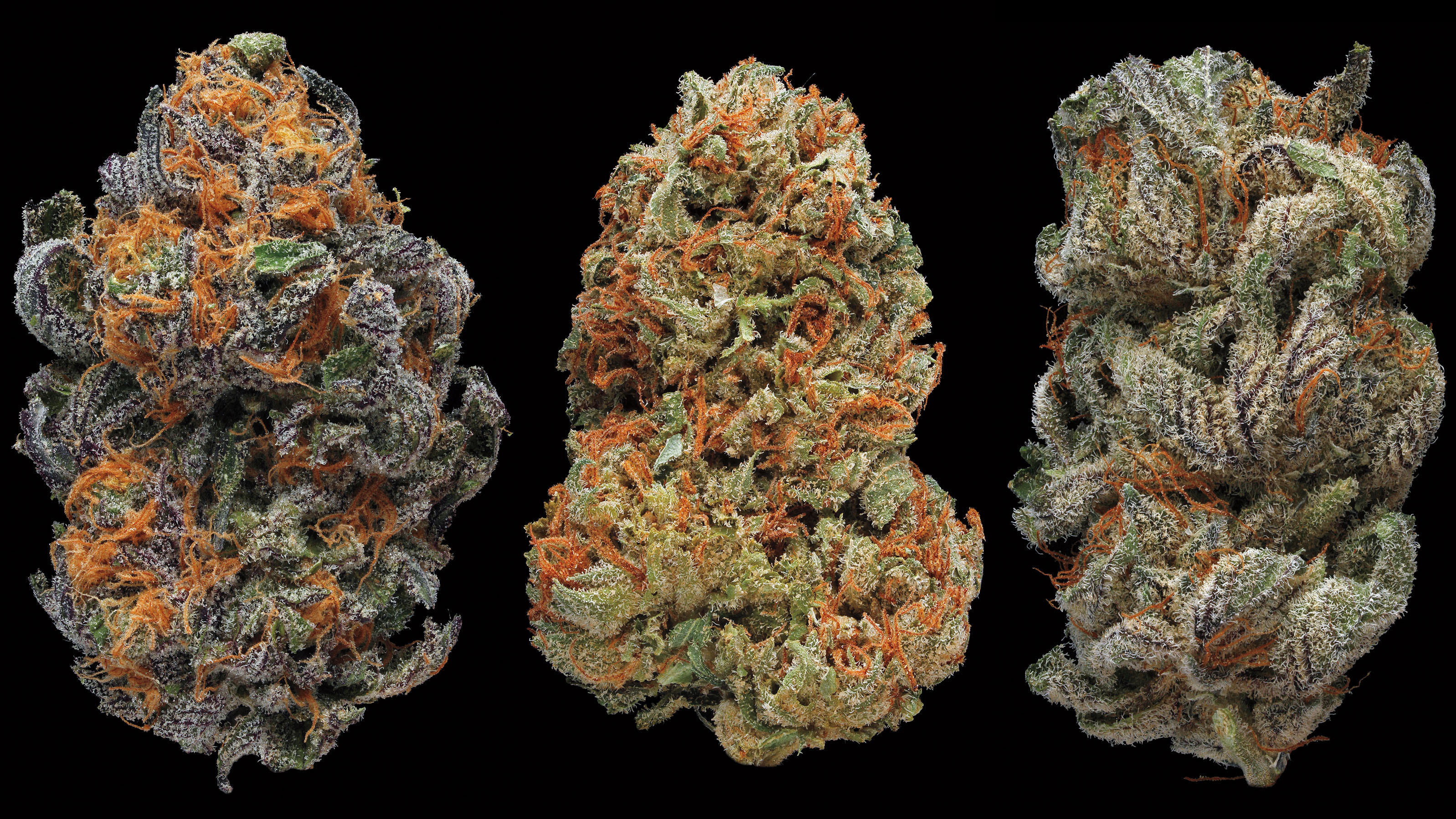 Smoking Marijuana Good