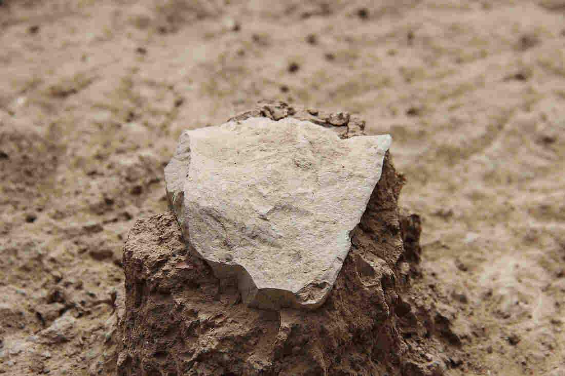 An ancient stone tool unearthed at the excavation site near Kenya's Lake Turkana. It's not just the shape and sharp edges that suggest it was deliberately crafted, the researchers say, but also the dozens of stone flakes next to it that were part of the same kit.