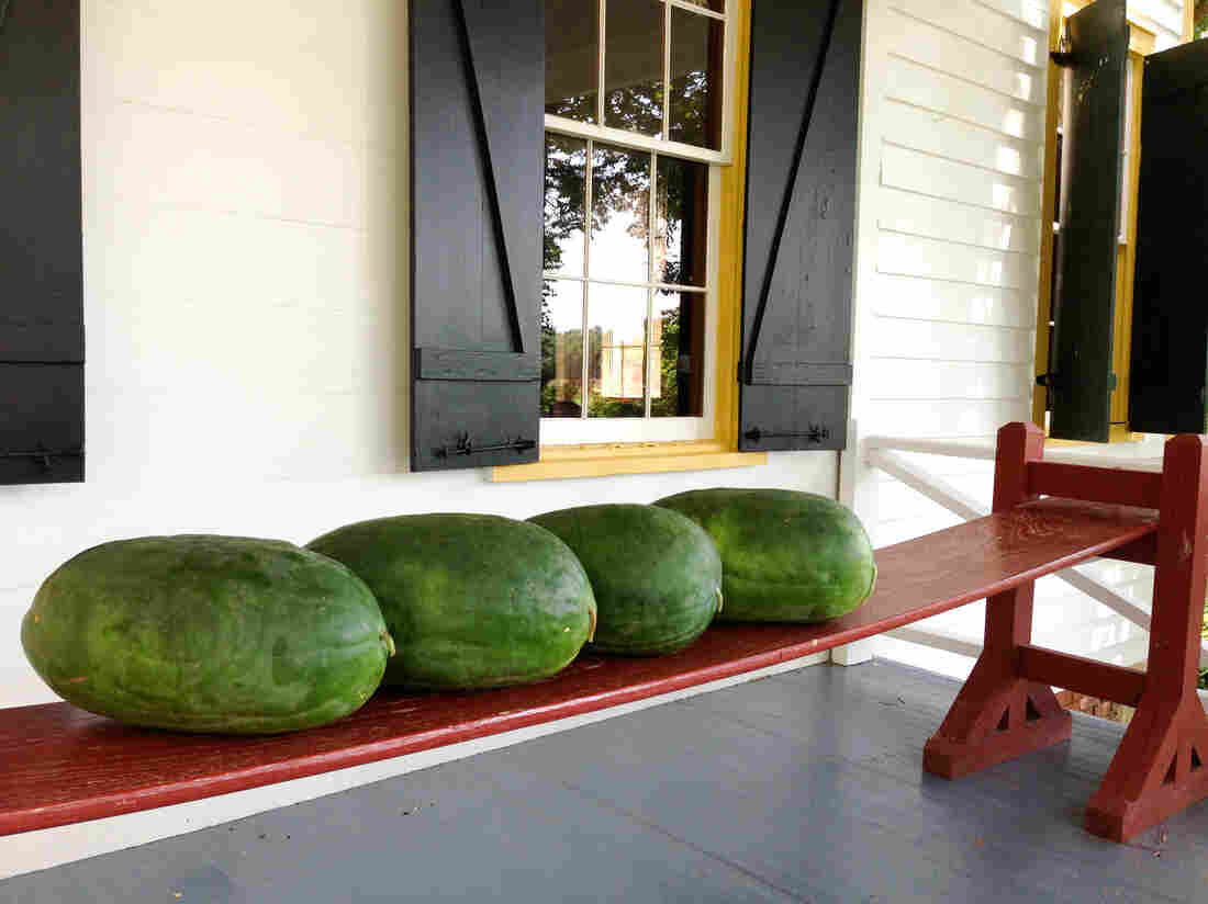 Bradford watermelons sit on a joggling board at Nat Bradford's home in Sumter, S.C.