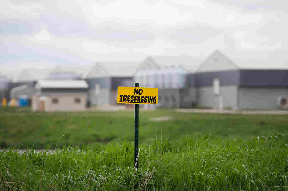 """""""No trespassing"""" signs are posted on the edge of a field at a farm operated by Daybreak Foods near Eagle Grove, Iowa, which has been designated """"bio security area,"""" on May 17."""