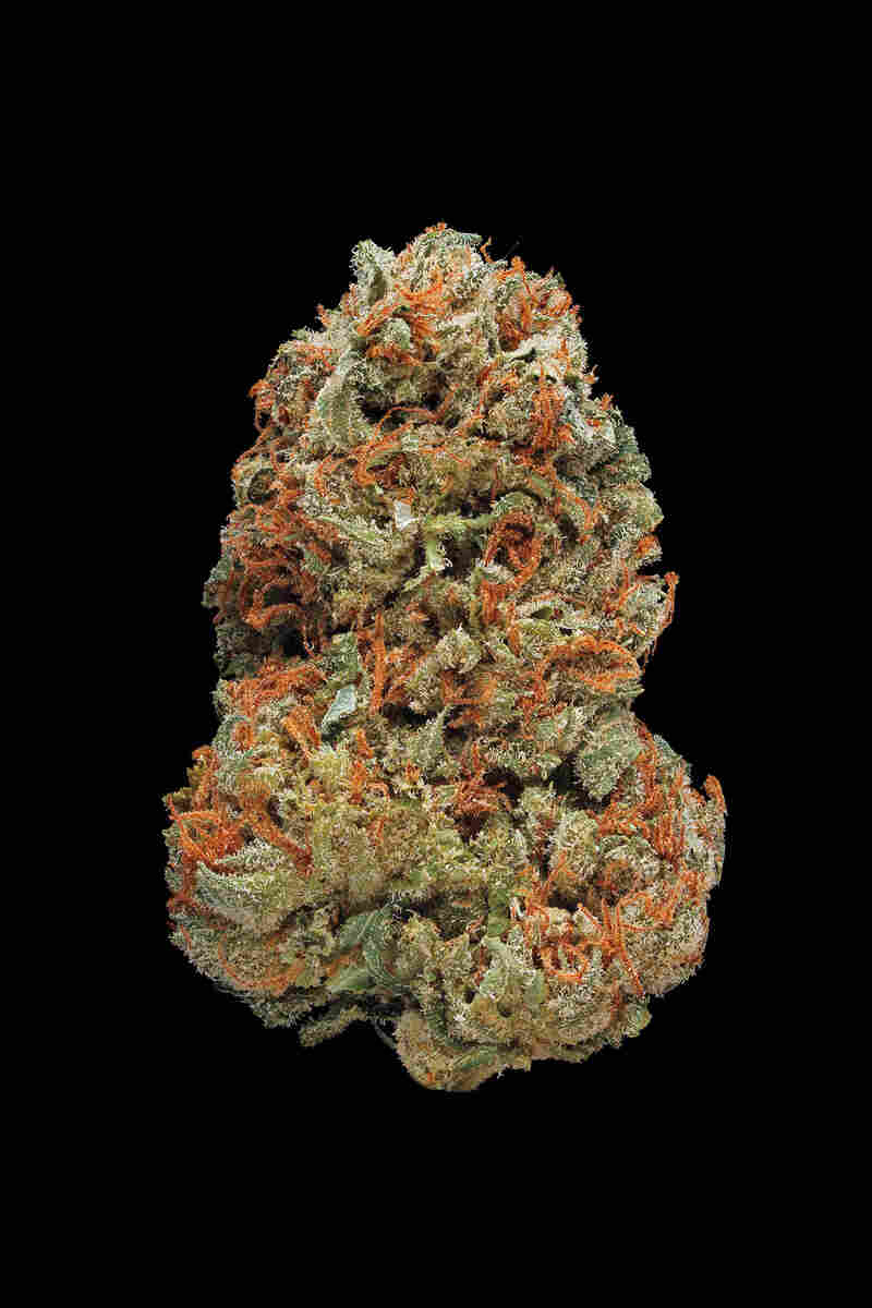 Skunk #1. Smell/Taste: skunky, pungent, acrid. Common effects: uplifting, pungent, acrid. Top medicinal uses: stress and anxiety.