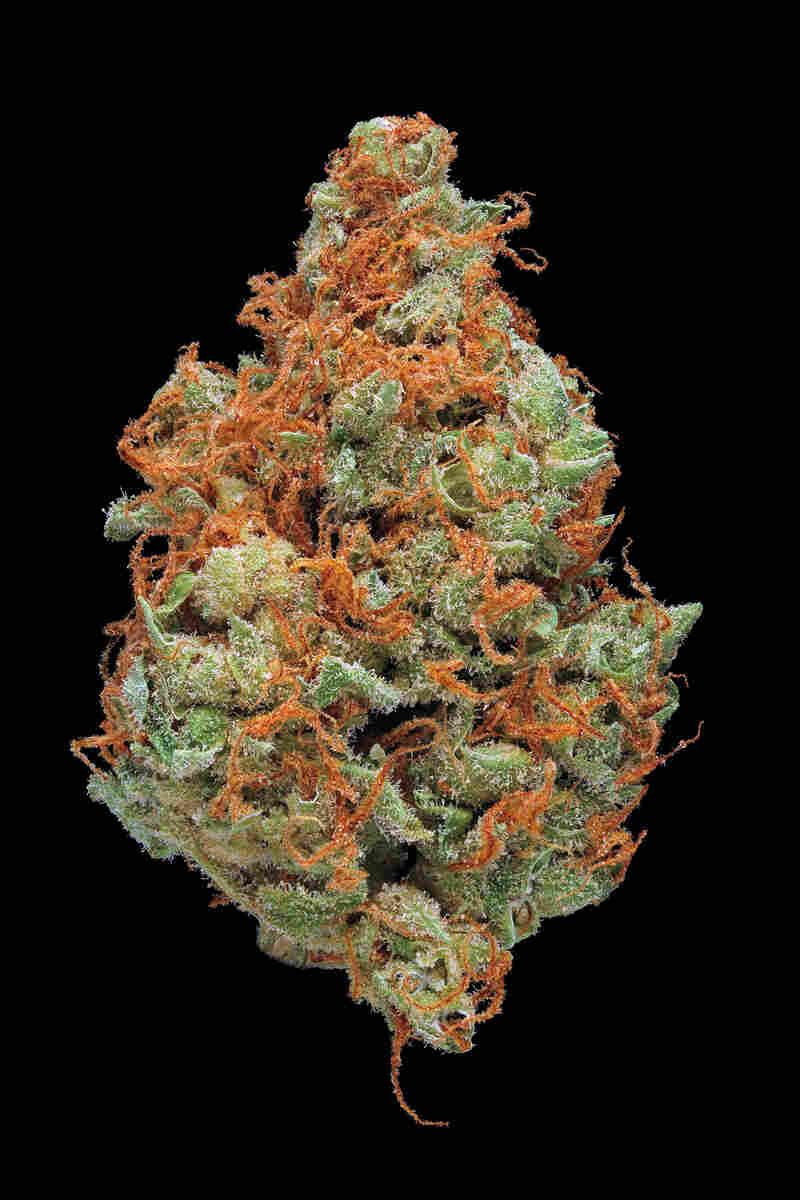 Strawberry Cough. Smell/taste: strawberry, cedar, earthy. Common effects: sociable, cheerful, focused. Top medicinal uses: fatigue and mood enhancement.