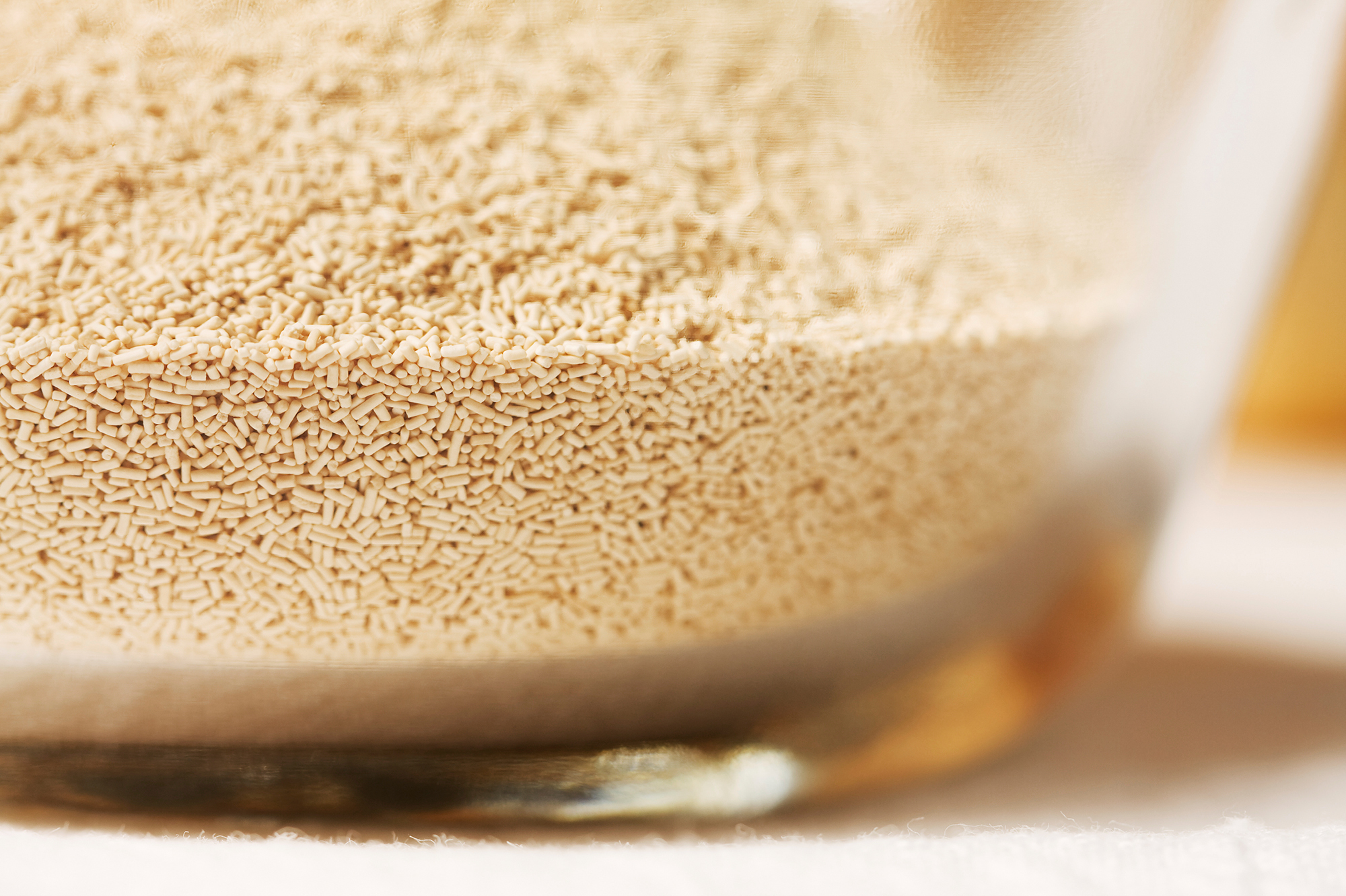 You And Yeast Have More In Common Than You Might Think