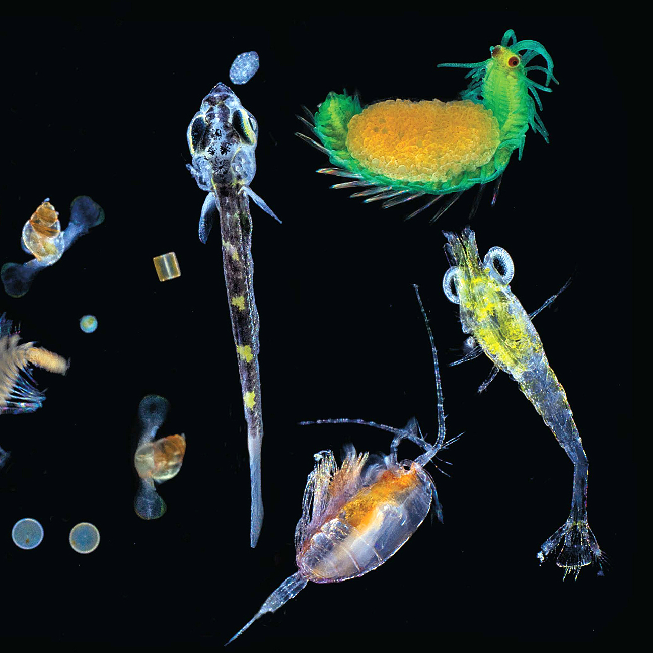Image for Census Reveals Universe Of Marine Microbes At Bottom Of The Food Chain