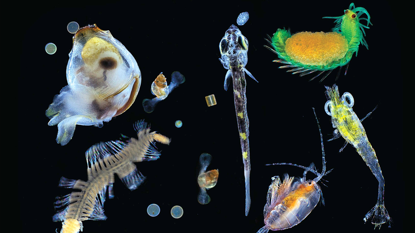 revealed the ocean u0027s tiniest life at the bottom of the food chain