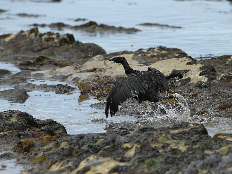 pipeline operator possibly months to determine cause of calif spill