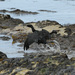 Pipeline Operator: Possibly Months To Determine Cause Of Calif. Spill