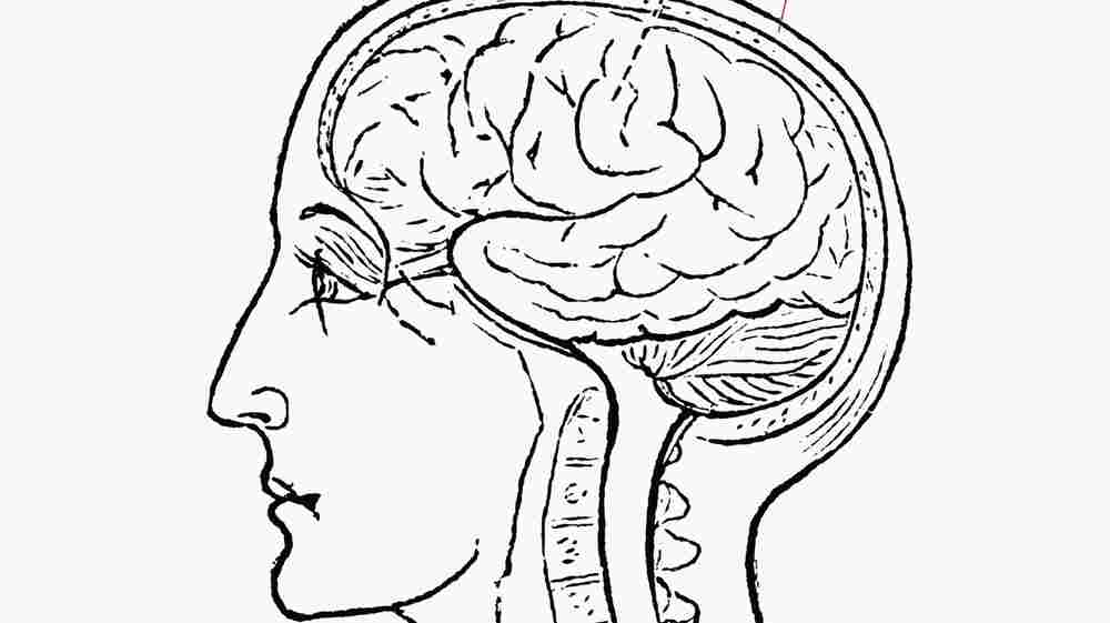A Neurosurgeon Reflects On The 'Awe And Mystery' Of The Brain