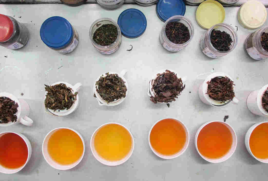 A range of Darjeeling tea at Goomtee Tea Estate in Darjeeling, India.