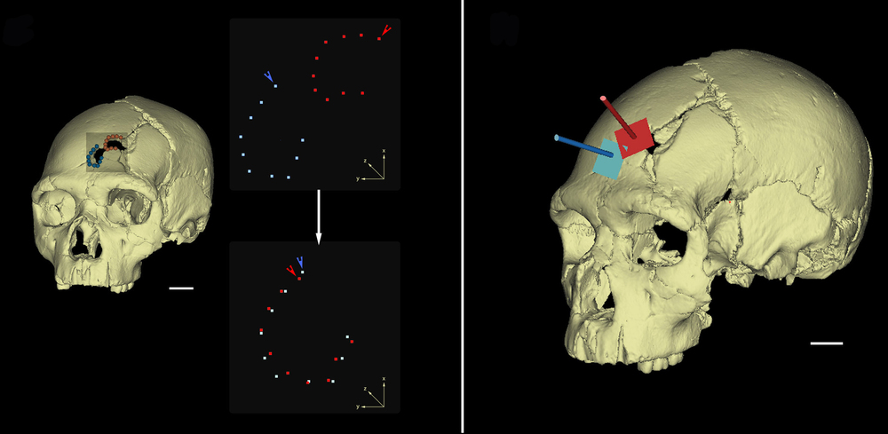 The team of scientists used 3-D imaging to re-create the injuries.