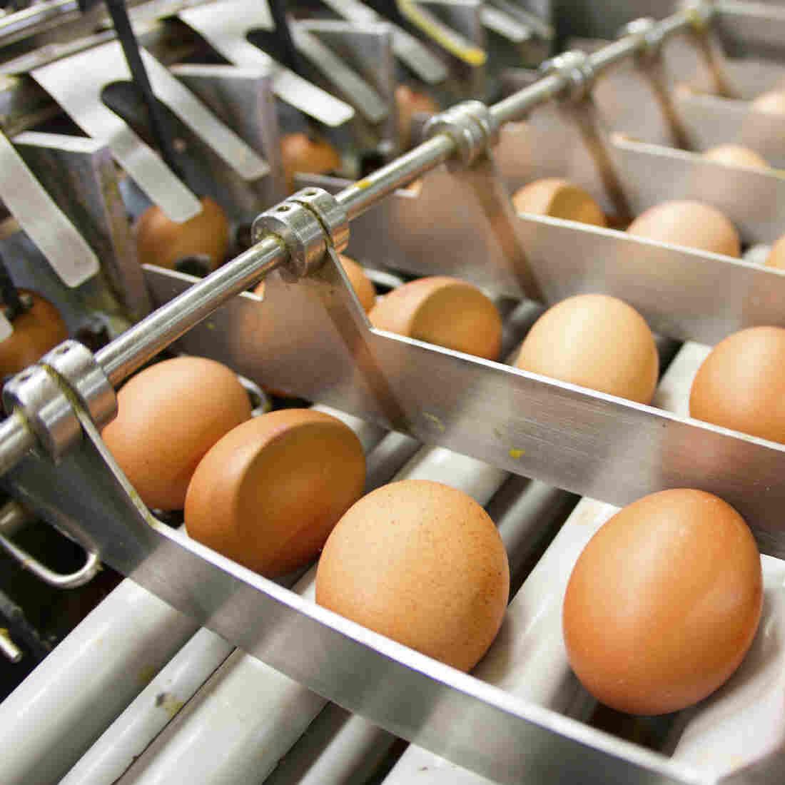 Avian Flu Outbreak Has U.S. Bakers Begging For Europe's Eggs