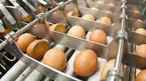 Avian Flu Outbreak Has U.S. Bakers Begging For Europe's Eggs