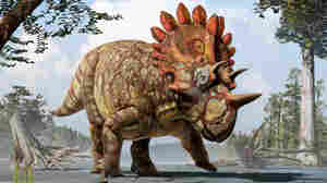 Newly Identified 'Hellboy' Dinosaur Sported Unique Horns, Scientists Say