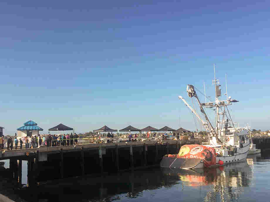A long line of people queued up to buy Pacific bluefin for the bargain price of $2.99 per pound last Saturday at the San Diego Tuna Harbor Dockside Market.