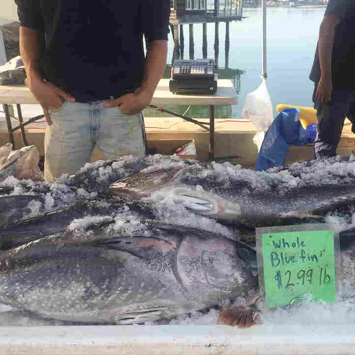 Why Is This Fisherman Selling Threatened Bluefin Tuna For $2.99 A Pound?