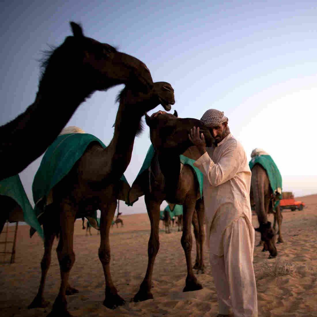 Why MERS Is Likely To Crop Up Outside The Middle East Again