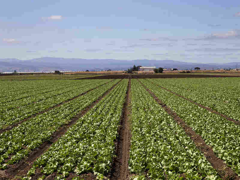 The Salinas Valley is known as America's salad bowl. The Natural Resources Defense Council estimates that farmers here and elsewhere around the country may over-plant by about 10 percent.