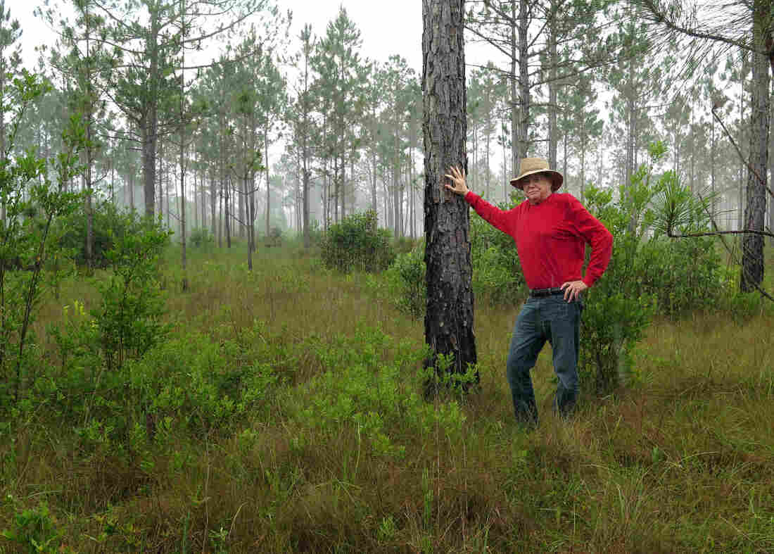 M.C. Davis, former gambler and businessman, stands in his 54,000-acre preserve, Nokuse Plantation, in the Florida Panhandle. It's the largest privately owned conservation area in the southeastern United States.