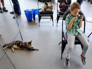 Tara, a 7-year-old cat, is still keeping a watchful eye over Jeremy Triantafilo.
