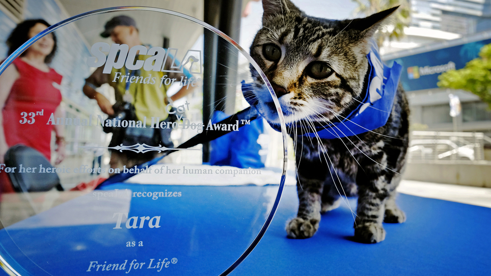 Tara is top dog, so to speak, after winning a hero award for rescuing her young owner from a canine attack last year.