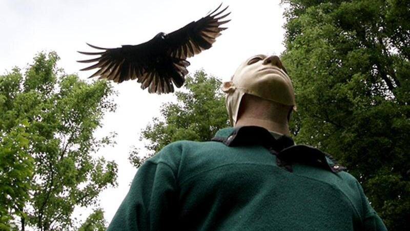 They Will Strafe You Bird Expert Says Of Seattles Dive Bombing