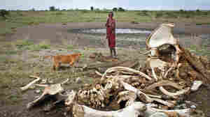 A Maasai boy and his dog, near the skeleton of an elephant killed by poachers outside of Arusha, Tanzania, in 2013.