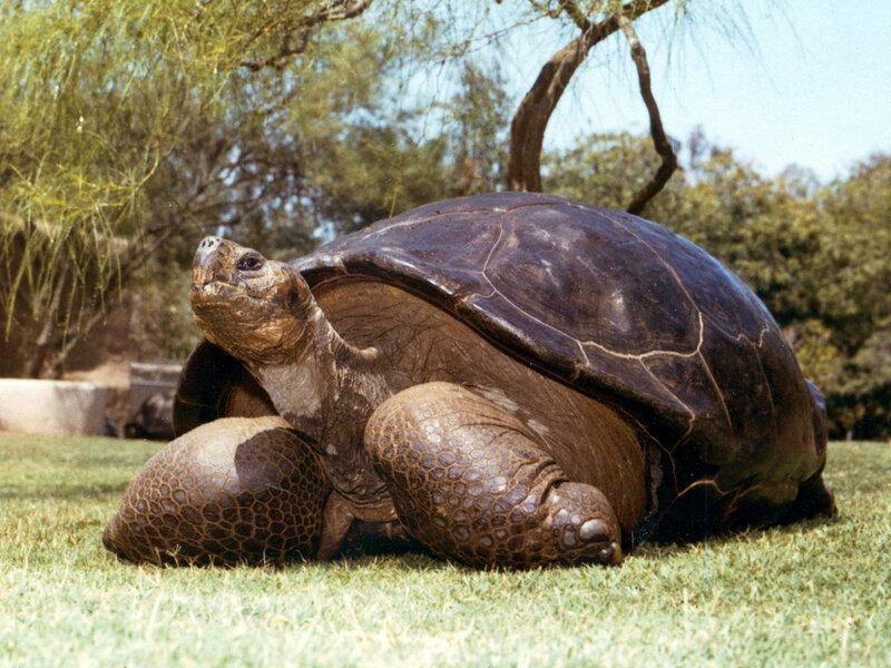 galapagos tortoise evolution