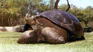 'Speed,' Galápagos Tortoise Who Came To San Diego In 1933, Dies At 150