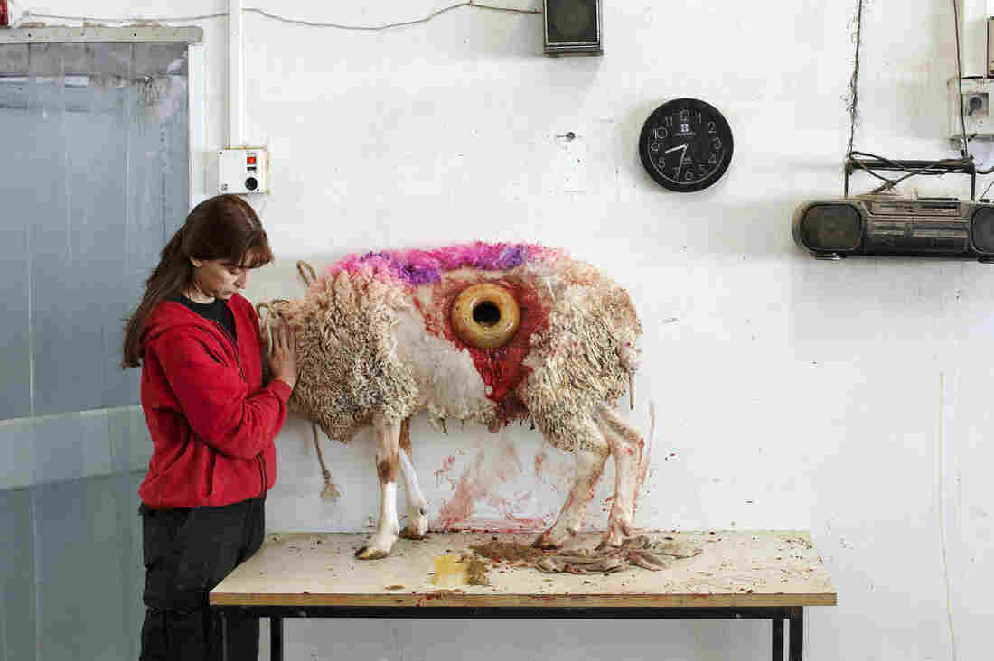 This untitled image by artist Martin Kollar, depicting a sheep with a hole in its stomach, is part of This Place, a photography exhibit now showing at the Tel Aviv Museum of Art.