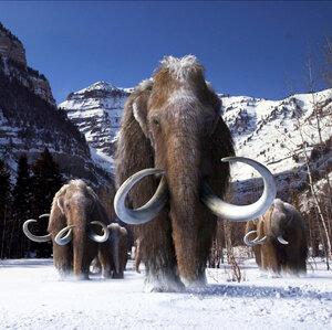 Verificar el ADN contra elefantes da pistas sobre cómo los mamuts se volvieron lanudos
