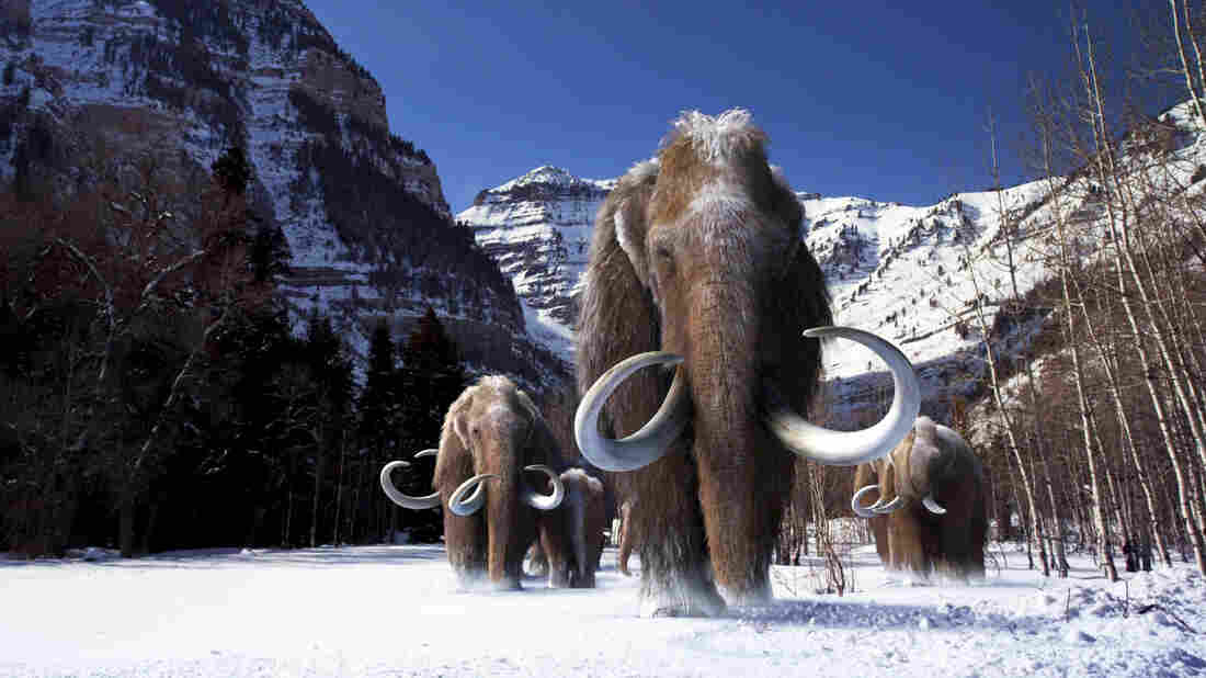 Image result for wooly mammoth ice snow