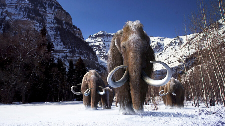 Image result for mammoth fossils discovered from russia