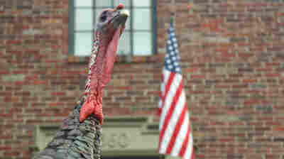 Benjamin Franklin thought the turkey was a much more respectable bird than the eagle.