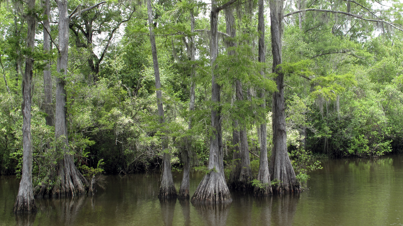 A few miles from mobile a wealth of history nature and danger npr izmirmasajfo