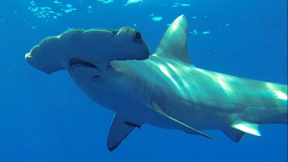 Shark Week : NPR